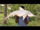Geleneksel Yoldan Köpekbalığı Yemek