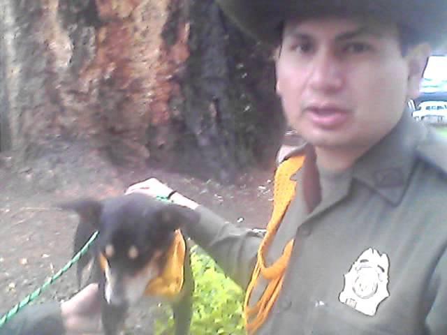 Selfie Noticia: perro rescatado en Salgar se encuentra en buen estado de salud