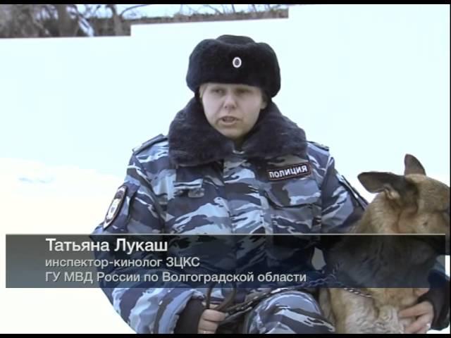 СТАЛИНГРАД Собаки - истребители танков