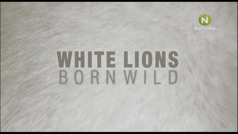 Дикие белые львицы 1 серия Наперекор судьбе / White Lions - Born Wild / 2012