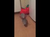Кролька Ру