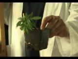 How-To-Grow-Marijuana-Dvd( cannabis ganja skunk pot hemp)