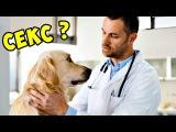 Измена ветеринара ► Аферисты в сетях