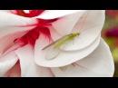 Белокрылка и паутинный клещ биозащита