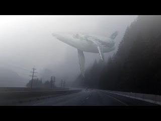 Flying whales - Летающие киты