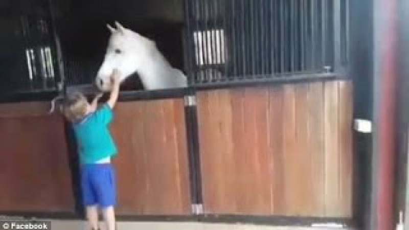 Boy is surprised with the pony he saved up for by selling lemonade cups