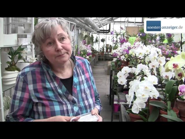 Expertin verrät wie Orchideen gedeihen