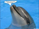 Фёдоровский симптом дельфина