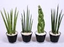 10 самых НЕПРИХОТЛИВЫХ комнатных растений или Цветы для лентяев ❖❖❖ Фото и назв