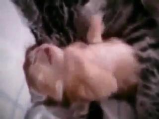 Мама поряд-кішка та кошеня