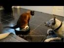 Cat And Vacuum Cleaner vs Dog
