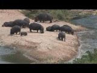 Основной инстинкт: ЮАР. Охота на бегемота
