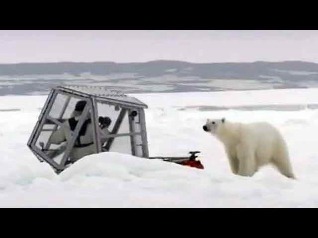 09 января 2013, Среда, 15:25, новости - Британский кинооператор Гордон Бьюкенен свел близкое знакомство с полярным медведем - Первый канал
