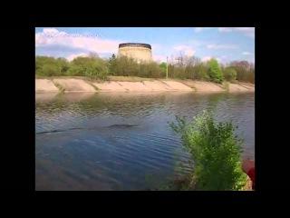 Необычное животное в Чернобыле... (youtube)
