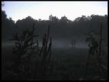 туман... снято в 2006 году
