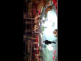 Тигры Суматры прыгают в огненное кольцо.mp4