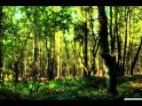 Elfsong - Shar (Original Mix)