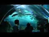 AQUARIUM RELAX. океанариум.太平洋海底世界