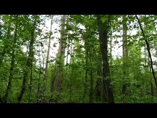 Прогулка по лесу в Гарболово в поисках ДОТов