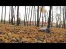 Purplish days. Lviv tracers 2012