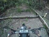Stels Trigger в лесу