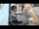 Sweet Mama Dog Interacting with a Beautiful Child (This dog has more humanity that humans)