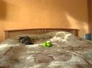 Katze hat angst vor 2 grüne Äpfel