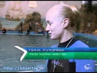 В харьковском дельфинарии появился белый кит