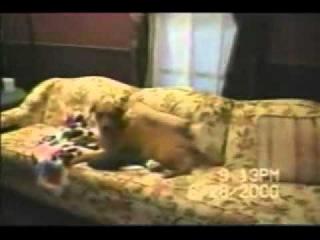 Cat Кошки 0063   Дружба Животных Между Различными Разновидностями