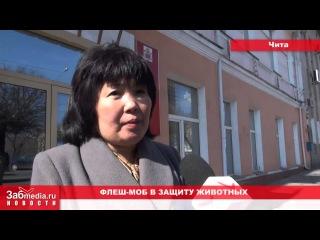 Михалев назвал Читу грязной (01 04 2013)