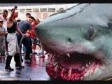 Megalodon самая большая акула))
