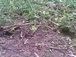 Имарат Кавказ 2011  Бой в лесу ! Caucasus Emirate 2011 Fight in wood !