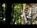 В дебрях Латинской Америки.1. Амазонка. Один лес, много миров.2012 HD.mp4