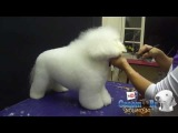 Groom Tv Br - Tosa de Bichon Frisé (corte clássico)- Adriana Skolimoski HD #25