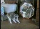 Pisici Haioase Mori De Ras