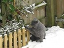 My cat Tuantuan Yuanyuan playing with snow