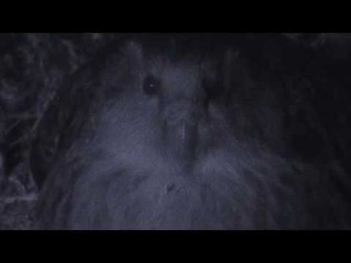 KAKAPO FEATURE FILM, The Unnatural History of the Kakapo, Clip 1
