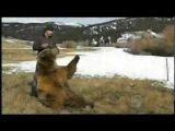 Igry_s_medvedem_grizli.avi