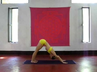 ASHTANGA YOGA Kino Macgregor at PURPLE VALLEY yoga retreat Goa,India www.yogagoa.com