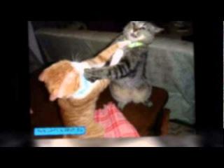 Коты и кошки ! часть 3 из фото подруги Светланы н ..mpg