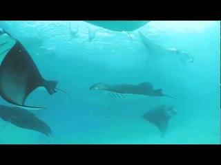 Бухта рифа Ханифару на Мальдивах - крупнейшее скопление мант и китовых акул на Земле.