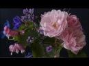Pietro Locatelli Bizarria Op 5 n 6 Trio sonata for flute violin double continuo in G major