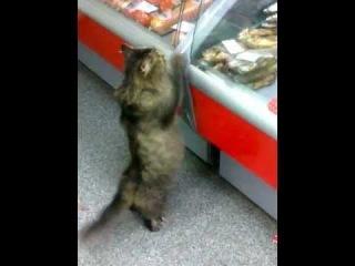 КотЭ в Мясном магазине!