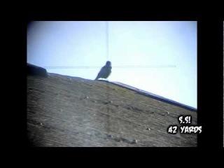 Air Rifle Pest Control: Farm Yard Vermin Scope Cam Sniping Slow Motion headshots
