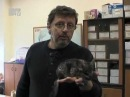 Добрый вечер, животные Выпуск 3 (17.10.2012)