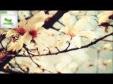 Lessov - Komodo - (Aleksey Yakovlev Remix)