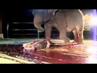 Роды у слонов