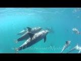 Dolphins by Unterwasser