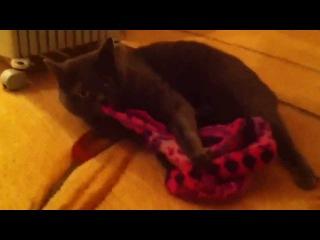 Кошка делает что-то странное с шапкой