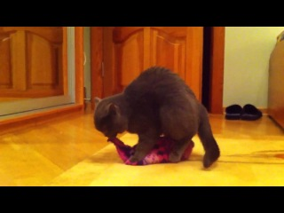 Кошка с шапкой упала